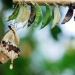 EQlibre_transformatie