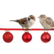 kerstmis-moet-gezellig-zijn
